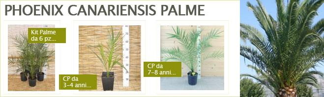 Benvenuto su verdenergia il portale per tuoi acquisti for Vendita bambu