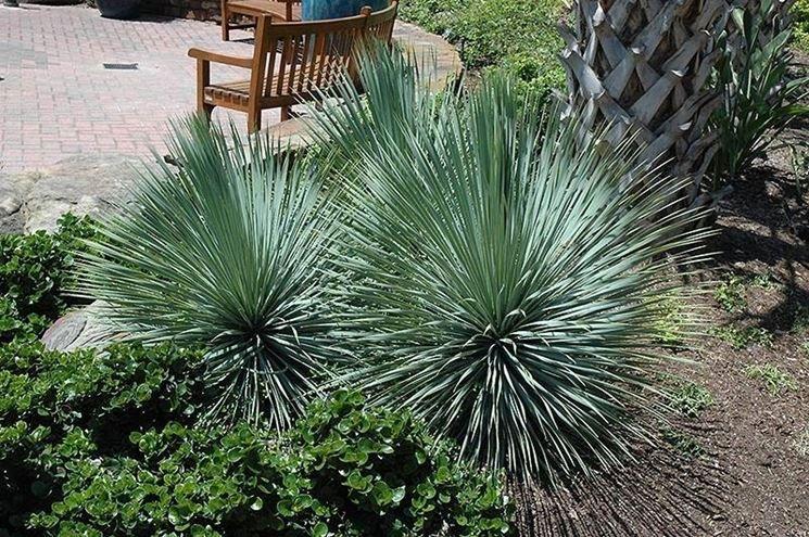 Kit misti 6 piante da giardino mix di piante palme for Vendita palme da giardino prezzi