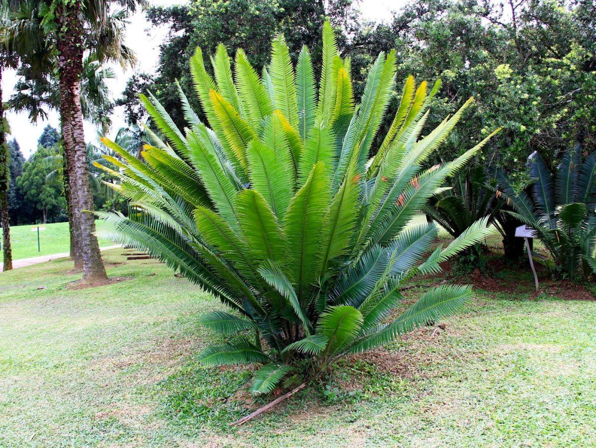 Kit misti piante da giardino mix di piante palme sempreverdi con